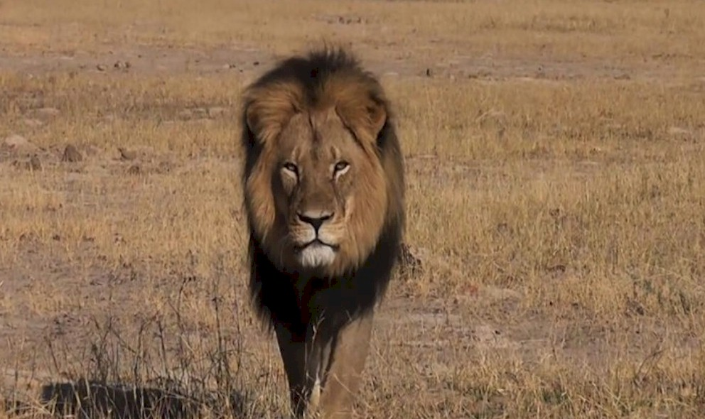 Jericho, Cecil the Lion's Brother, Shot Dead Today