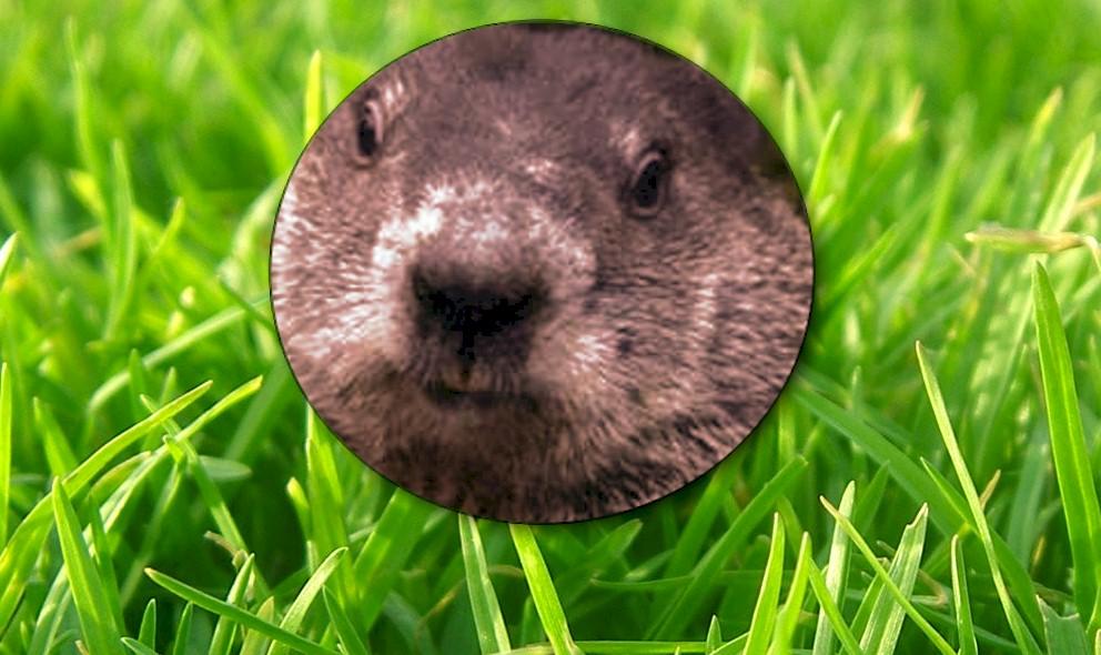 Did Ground Hog See His Shadow 2016: Groundhog Didn't See Shadow