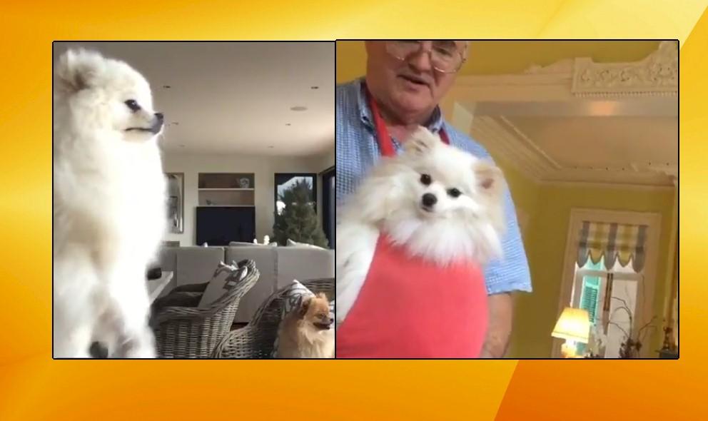 Patricia Altschul vs Gamble Breaux: Battle of Adorable Dogs: EXCLUSIVE